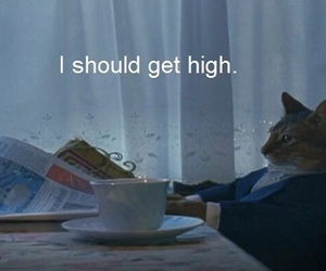 cat, high, and weed image
