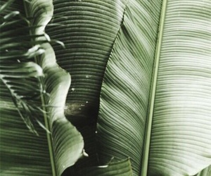 theme, green, and tropical image