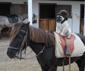 dog, funny, and horse image