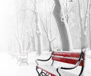 bench, february, and outdoors image