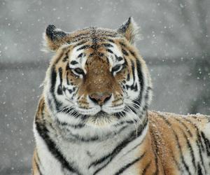 snow, abigfave, and specanimal image