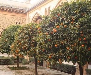 orange, trees, and architectute image