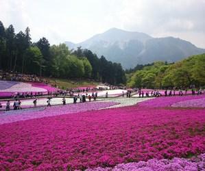 flowers, garden, and chichibu image