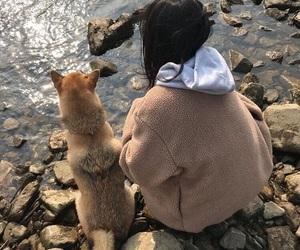 dog, korea, and ullzang image