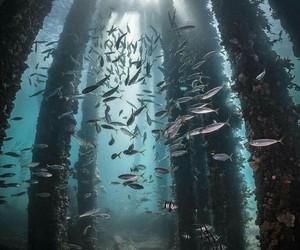 fish and sea image