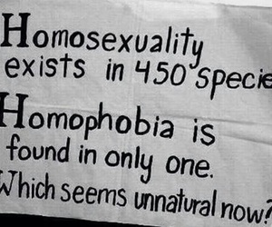 gay pride, lgbt, and fuck nazis image