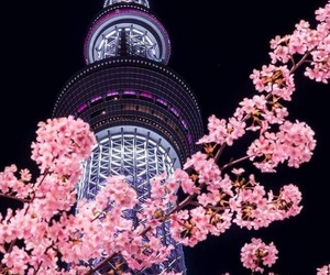 sakura, beautiful, and japan image