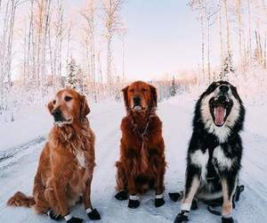 dog, winter, and animal image