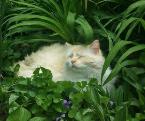 cat, green, and animal image
