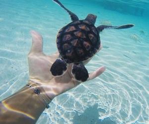 turtle, animals, and beach image