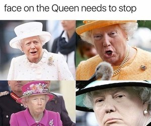 funny, meme, and Queen image