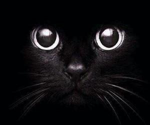 gato negro and fondo de pantalla de gato image
