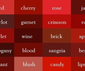 red, colors, and rose image