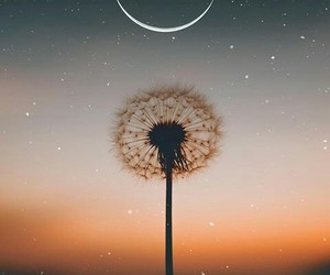 aesthetic, alternative, and dandelion image