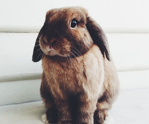 animal, cute, and rabbit image