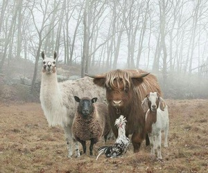 animal, llama, and goat image