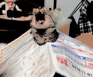aesthetic, cat, and neko image