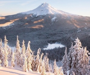 forest, mountain, and snow image