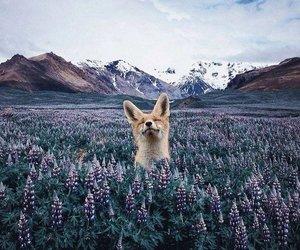 animal, fox, and mountains image