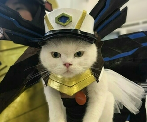 cat, costume, and cute image