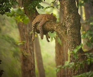 nature, tree, and animal image