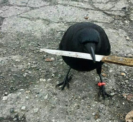 funny, crow, and knife image