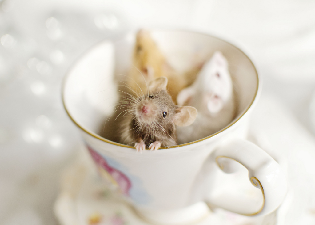 mouse, teacup, and cute image