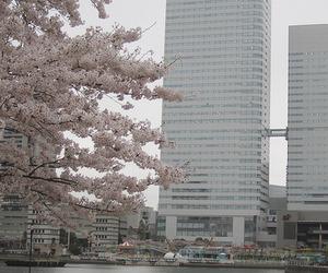 japan, korea, and pink image