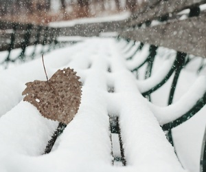 bench, leaf, and bokeh image