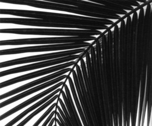 black and white, palms, and black image