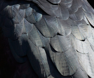 feathers, gray, and grey image