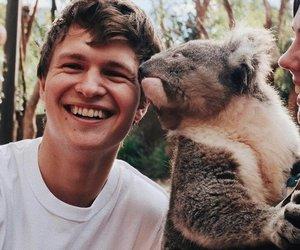 ansel elgort, animal, and Koala image