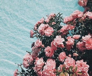 beauty, pink flowers, and flower aesthetic image