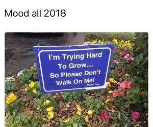 funny, mood, and 2017 image