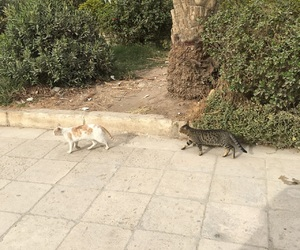 cat, egypt, and kittens image