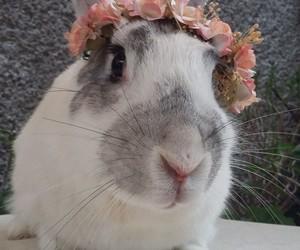 conejos, corona, and bigotes image