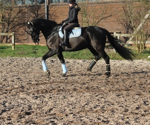 blue, dressage, and equestrian image