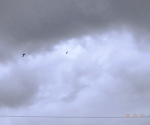 birds, cloudy, and clouds image