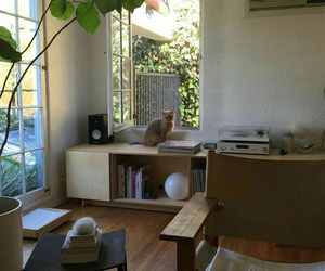 cat, plants, and room decor image