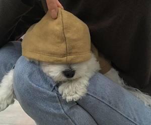 chien, mignon, and cute image