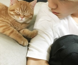 asian, boy, and cat image