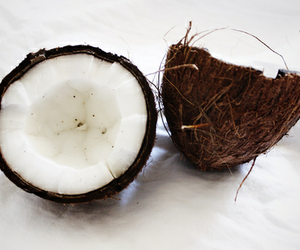 aesthetic, summer vibes, and coconut image