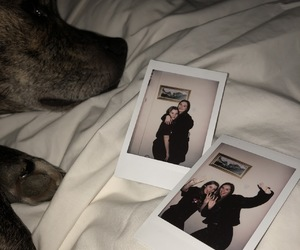 aesthetic, best friend, and dog image