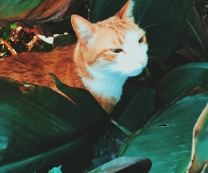 brown, cat, and green image