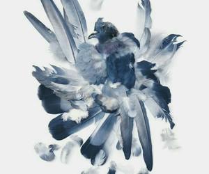 bird, blue, and bluebird image