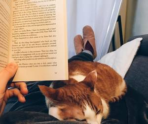 bed, book, and kitty image