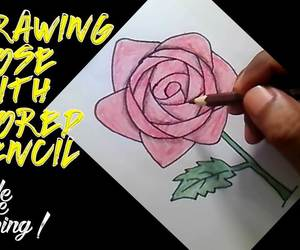 draw, drawing, and rose image