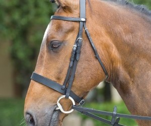 snaffle bridle, caveson bridle, and eggbutt snaffle image