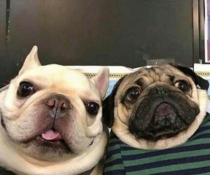 lol, dogs, and cute image