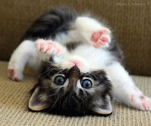 adorable, kitten, and looking image